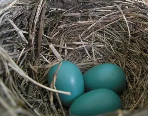 Tiffany Blue 居然是蛋壳的颜色