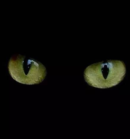 如何辨别猫眼石-猫眼石的寓意