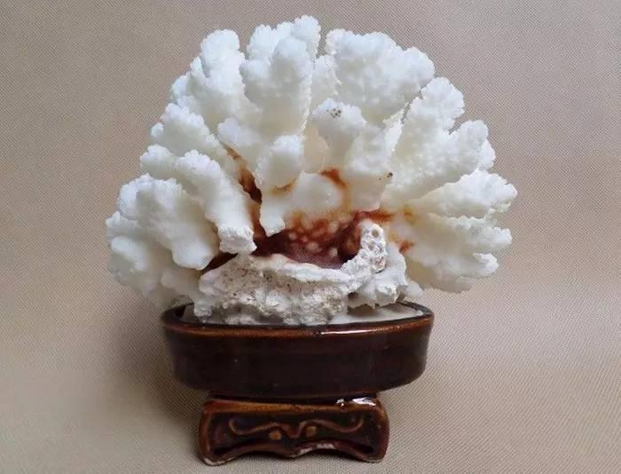 珊瑚的价格-珊瑚种类名称及图片-珊瑚的优化和处理