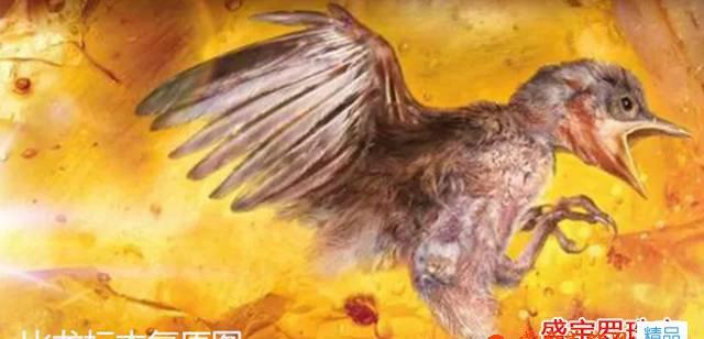 琥珀中发现古雏鸟,一次生物学上的重大发现!