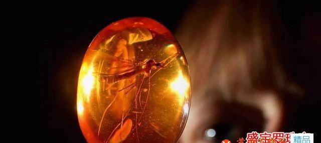 波罗的海虫珀收藏价值参考,看完又涨知识了!