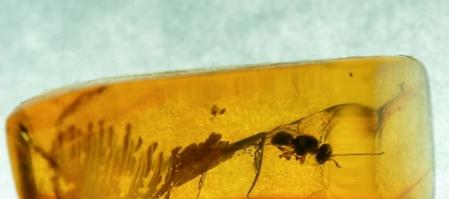 天然昆虫琥珀价格,虫珀的收藏空间怎么样?