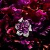 Sortilege de Cartier高级珠宝系列