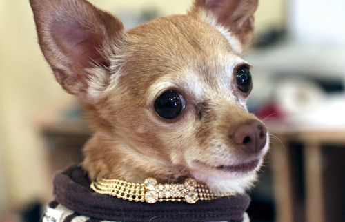SWAROVSKI用水晶武装你的宠物-珠宝首饰展示图【行业经典】