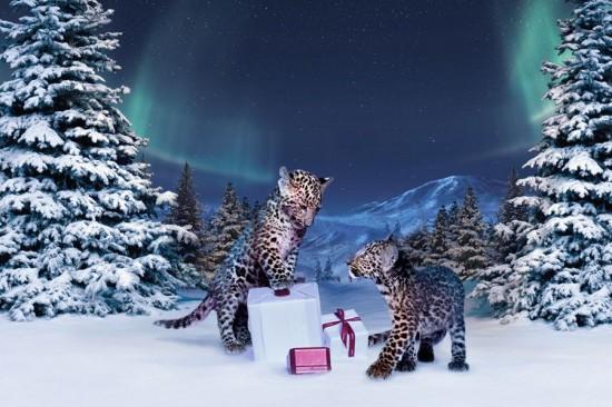 冬季童话 卡地亚2012 Winter Tale圣诞影片-珠宝首饰展示【行业精选】