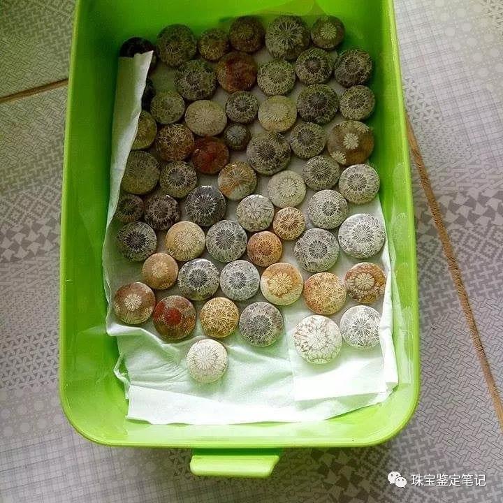 【印尼珊瑚玉图片】珊瑚玉什么颜色最珍贵?