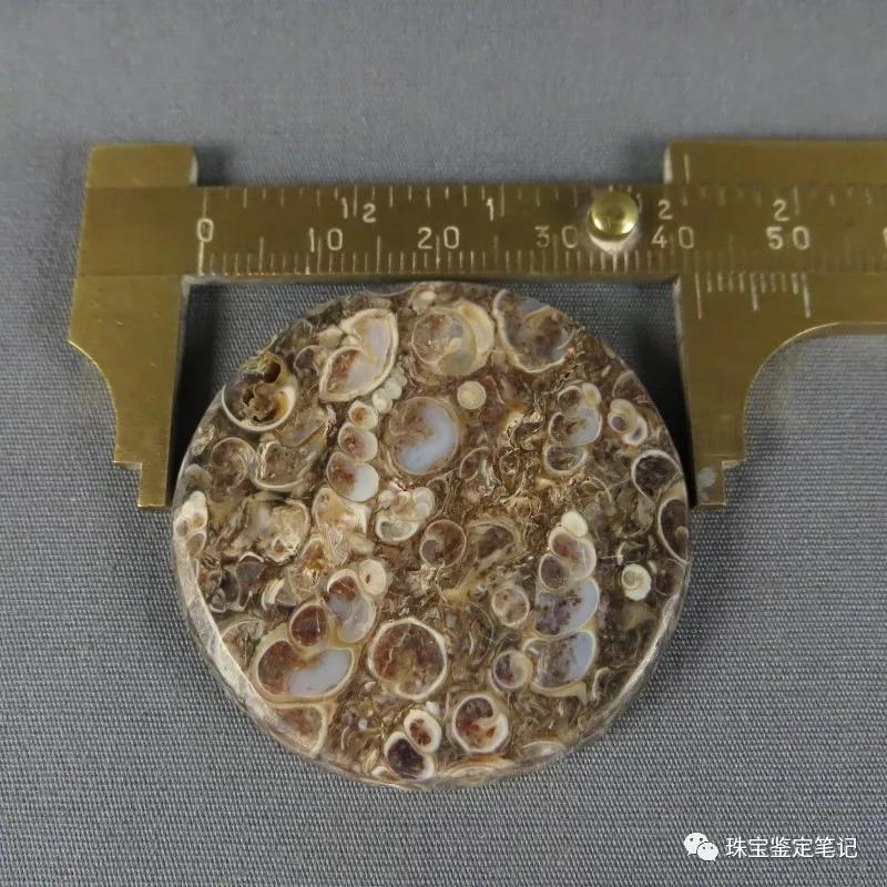 法螺天珠的骗局,塔螺玛瑙(Turritella Agate)鉴定【塔螺玛瑙】