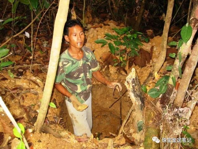 印尼珊瑚玉是什么?印尼珊瑚玉图片【解读】