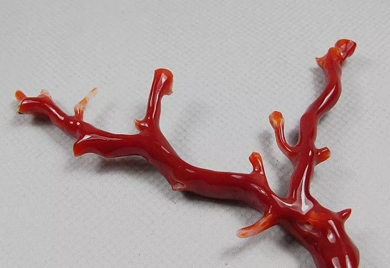 珊瑚-珊瑚图片