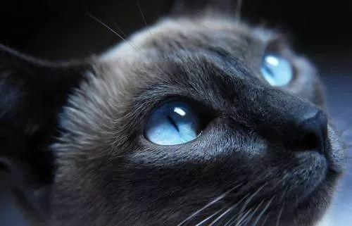 最具神秘灵气的猫眼石,慈禧要放枕下才可入睡